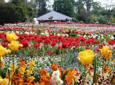 Swansea Parks and Gardens