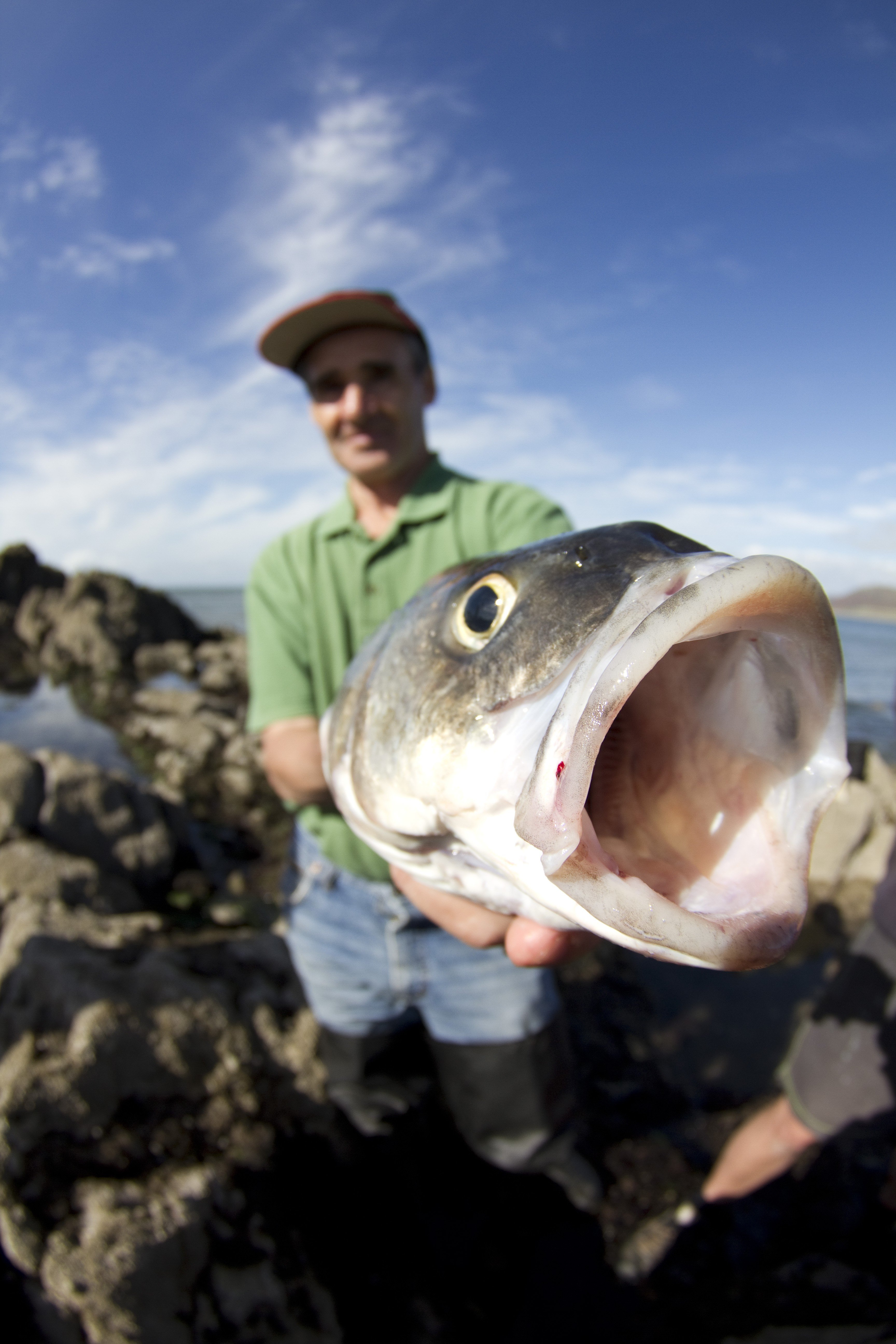 Catch of the day - Fishing in Swansea, Mumbles & Gower