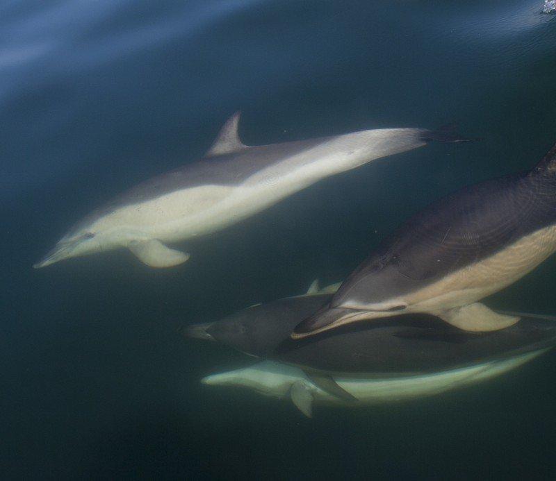 Shy cetaceans