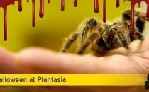 Halloween Spook Night at Plantasia