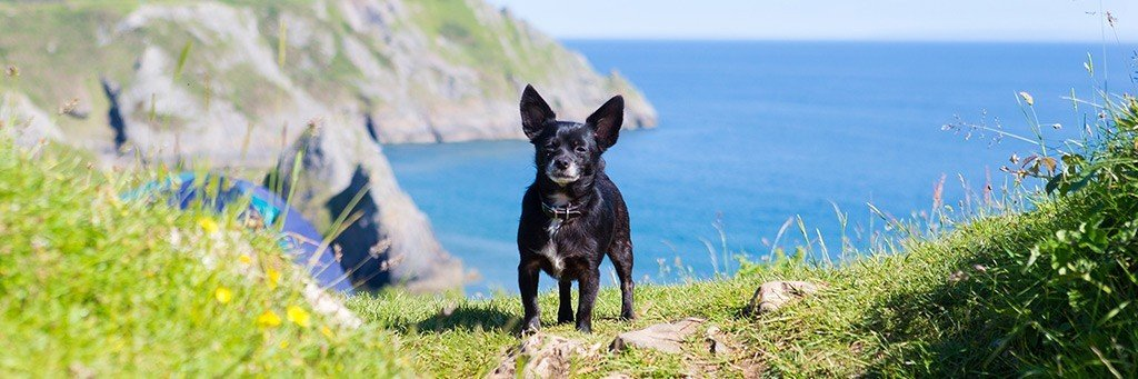 Dog Friendly Beaches & UK Holidays