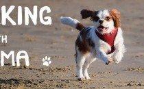 Walking-with-Wilma-blog-header