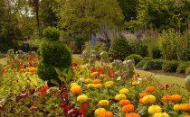 Botanics-in-Bloom